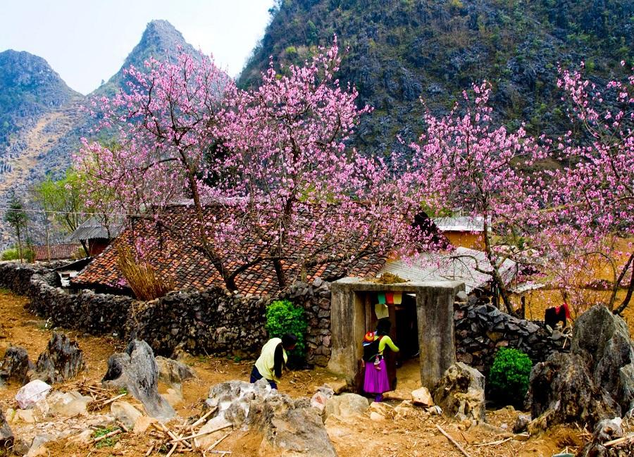 Đến Sa Pa vào mùa xuân để ngắm hoa đào nở