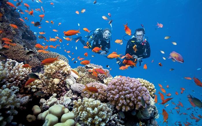 Hòn Thơm là cái nôi của các loài san hồ và ngọc trai tại Phú Quốc