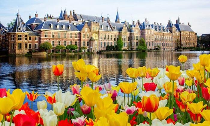 Hoa tulip khoa sắc rực rỡ bên không gian thơ mộng