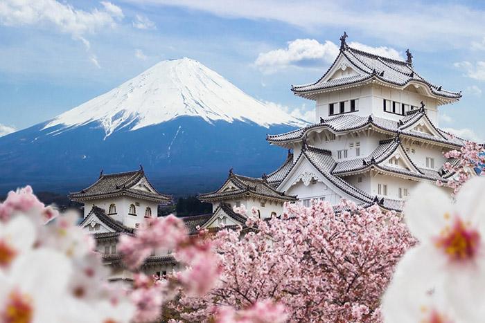 Lễ hội Hoa Anh Đào của Nhật Bản