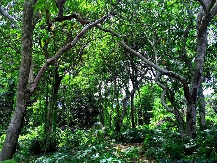 Khám phá hệ sinh thái phong phú tại rừng nguyên sinh Phú Quốc